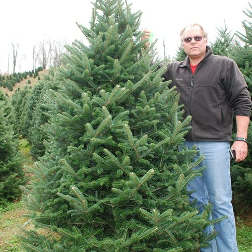 a1d7cbae81e This grade is one of the most popular grade of wholesale Christmas trees in  North Carolina.